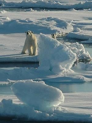 Bear Digital Art - Polar Bear And Cub by Kelley Elliott