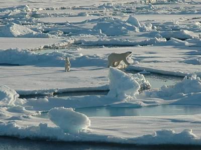 Bear Digital Art - Polar Bear And Her Cub by Kelley Elliott