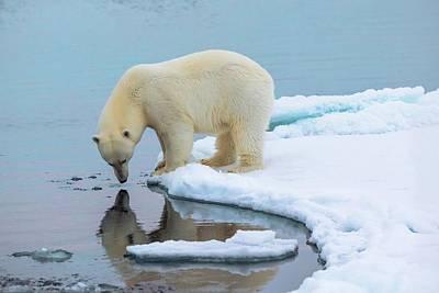 Polar Bear At The Edge Of An Ice Floe Art Print