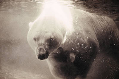 Photograph - Polar Bear Bubbles by Emily Stauring