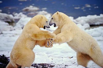 Photograph - Polar Bear Dance by Randy Green