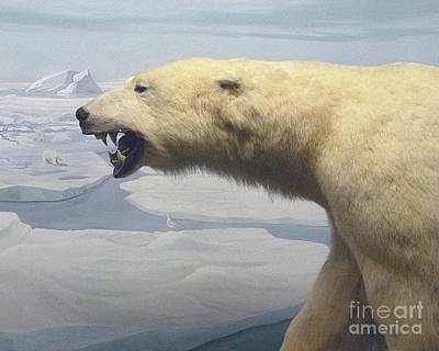 Photograph - Polar Bear Diorama by Mary Ann  Leitch