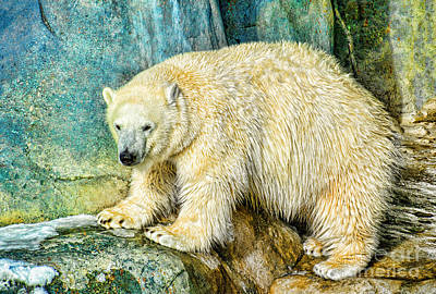 Photograph - Polar Bear In Green Land by Les Palenik