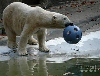 Photograph - Polar Bear Play by Avis  Noelle