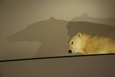 Photograph - Polar Bear Shadows by Kenny Glover