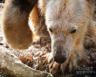 Impressionist Landscapes - Polar Bear Splash by Bill Piacesi