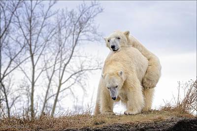 Photograph - Polar Bear Spring Fling by LeeAnn McLaneGoetz McLaneGoetzStudioLLCcom