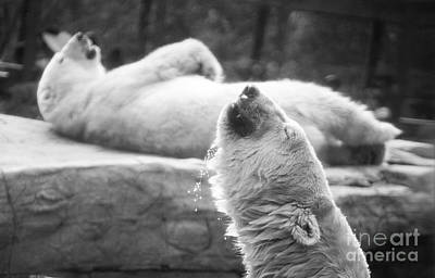 Polar Bears Art Print by Michael Ver Sprill