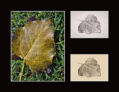 Photograph - Poplar Leaf 3x - Horizontal by Greg Jackson