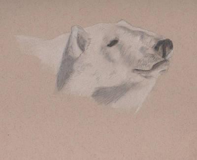 Drawing - Polarization by Crystal Hubbard