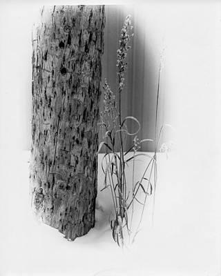 Pole And Grass Vignette Art Print