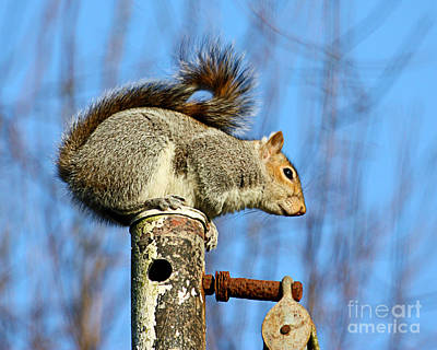 Photograph - Pole Dancing Squirrel by Terri Waters