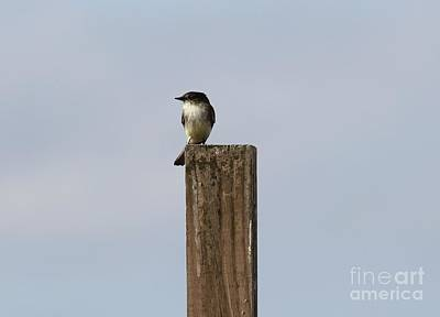Photograph - Pole Sitting by Theresa Willingham