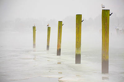 Photograph - Poles by Karol Livote