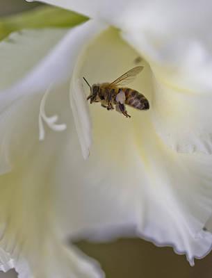 Pollen Carrier Bee Art Print by Maj Seda