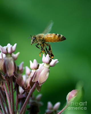 Photograph - Pollen Dance by Neal Eslinger