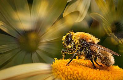 Photograph - Pollen Harvester by Kasandra Sproson