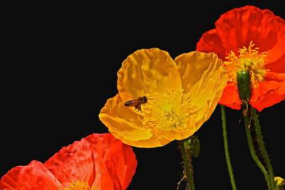Photograph - Pollen Patrol by Byron Varvarigos