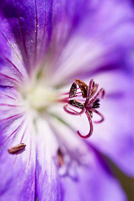 Photograph - Pollen  by Priya Ghose