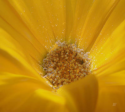 Photograph - Pollen Sunset by Barbara St Jean