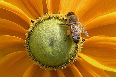 Photograph - Pollen Time by Brian Chase