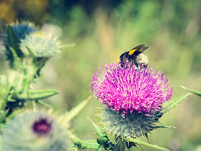 Travel Rights Managed Images - Pollination Agent II Royalty-Free Image by Marco Oliveira