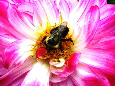 Pollination Nation 2 Art Print by Will Boutin Photos