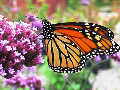 Pollination Nation 3 Art Print by Will Boutin Photos
