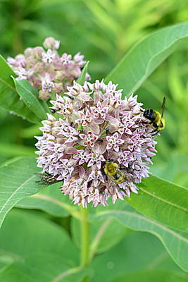 Photograph - Pollination Party by Joel E Blyler