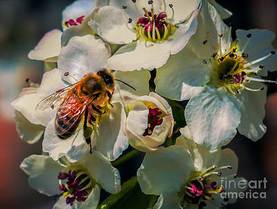 Photograph - Pollination by Robert Bales