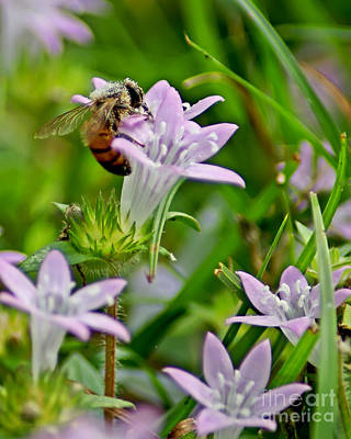 Photograph - Pollinator by Olga Hamilton