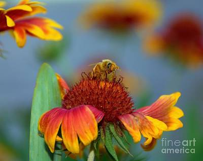 Photograph - Pollinator by Patrick Witz
