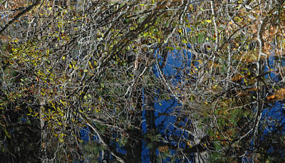 Photograph - Pollock's Nature by Donna Blackhall