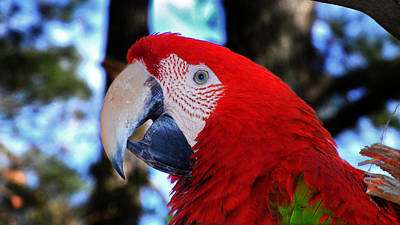 Photograph - Polly Parrot Wants A Cracker by Bill Swartwout