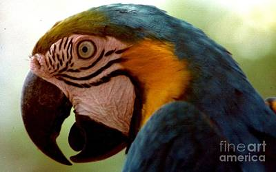 Photograph - Polly Want A Cracker At The Audubon Zoo And Zoological Gardens In New Orleans Louisiana by Michael Hoard