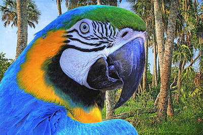 Macaw Photograph - Polly Who by HH Photography of Florida