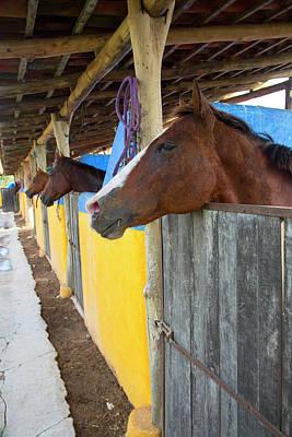 Polo Photograph - Polo Pony, Costa Careyes, Costalegre by Douglas Peebles