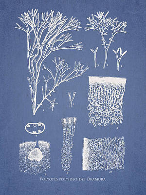 Aquarium Digital Art - Polyopes Polyideoides Okamura by Aged Pixel