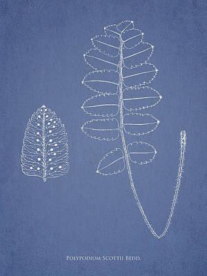 Polypodium Scottii Art Print