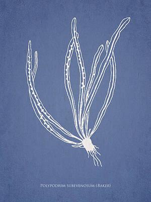 Polypodium Subevenosum Art Print