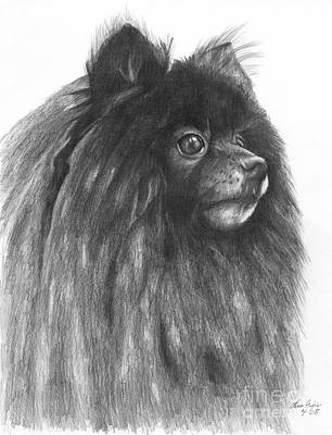 Drawing - Pomeranian by Lena Auxier