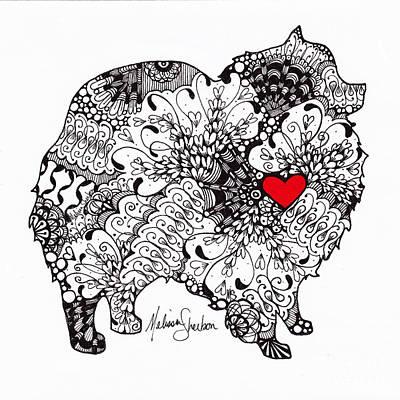 Drawing - Pomeranian by Melissa Sherbon