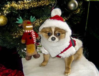 Photograph - Pomeranian Santa by Gary Keesler