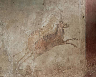 Photograph - Pompeii Animal Fresco by Roger Mullenhour