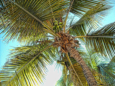 Photograph - Ponce Palm by Daniel Sheldon