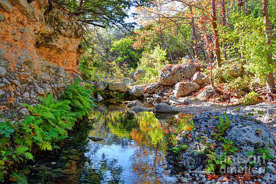 Pond At Lost Maples Art Print