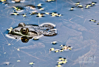 Photograph - Pond Dweller by Cheryl Baxter