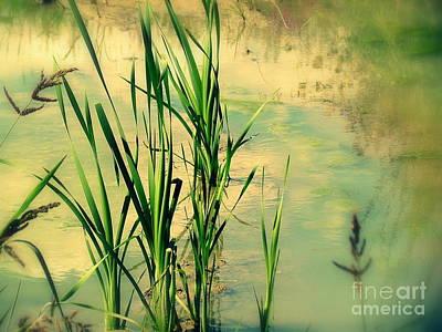Photograph - Pond  by France Laliberte