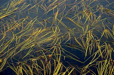 Pond Grass Art Print by Marv Russell