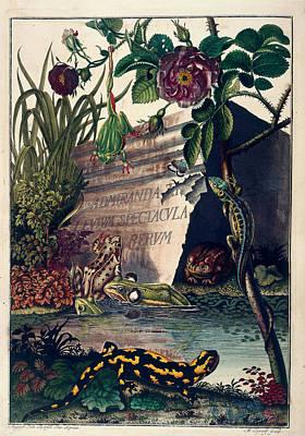 Naturalis Photograph - Pond Life by British Library